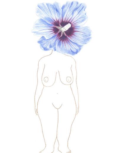 hibiscus-bleu/crayons de couleurs A4