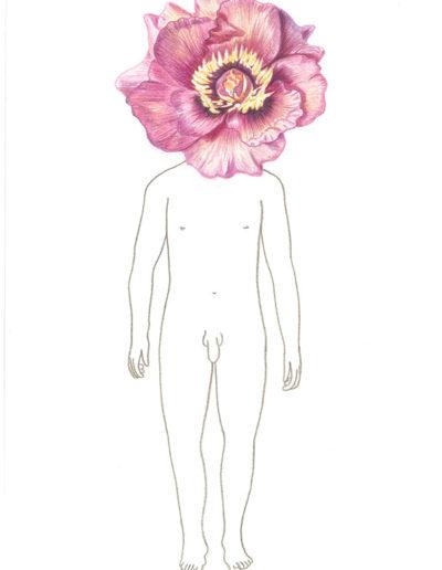 pivoine-rose/crayons de couleurs A4