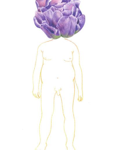 tulipe-à-fleurs-de-pivoine / crayons de couleurs A4