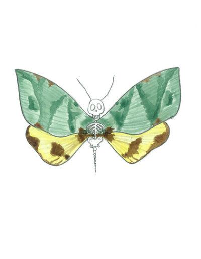 vanité-papillon-bleu-jaune