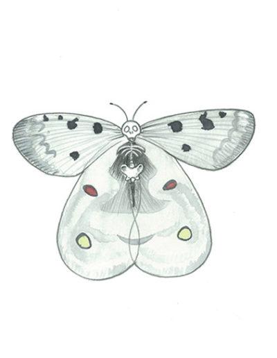 vanité-papillon-gris