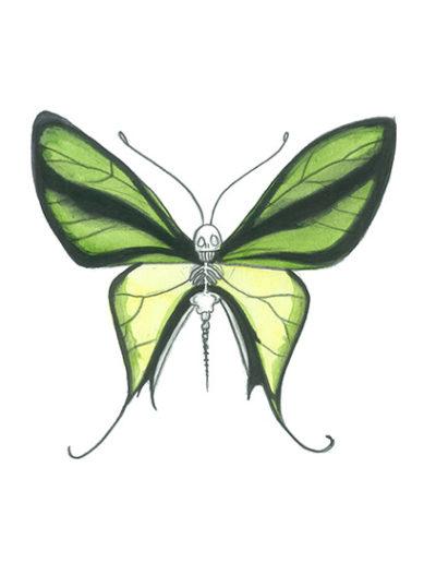 vanité-papillon-vert