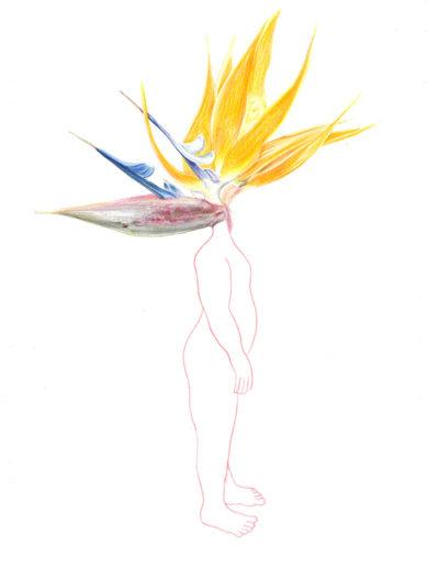 biodiversité 15/crayons de couleurs/A4/2017